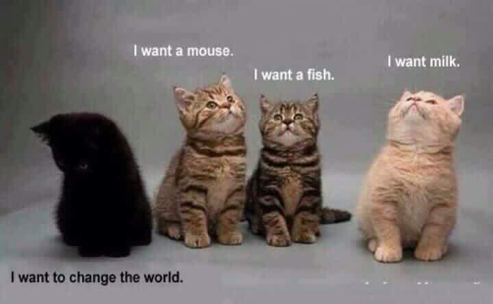 Black Cat Thoughts.JPG