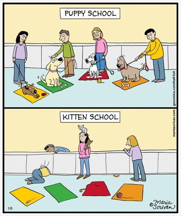 KittenSchool.jpg