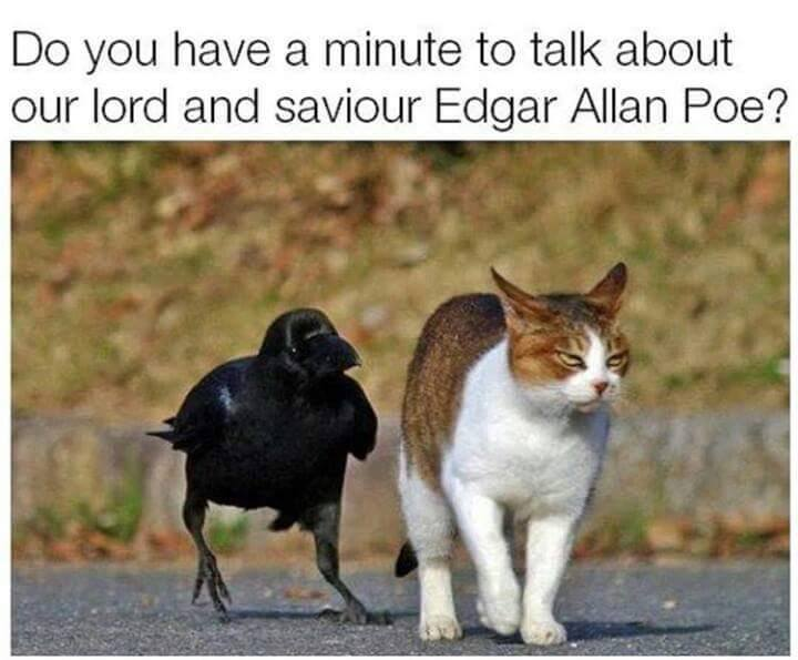 Crow and cat.jpg