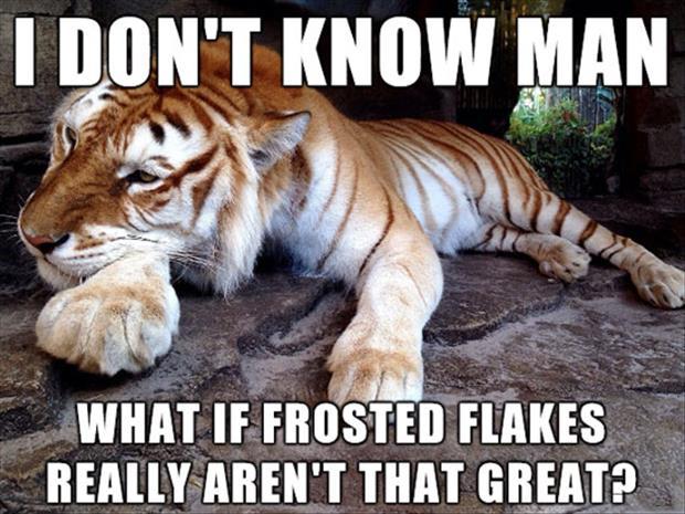 funny-tiger-meme.jpg