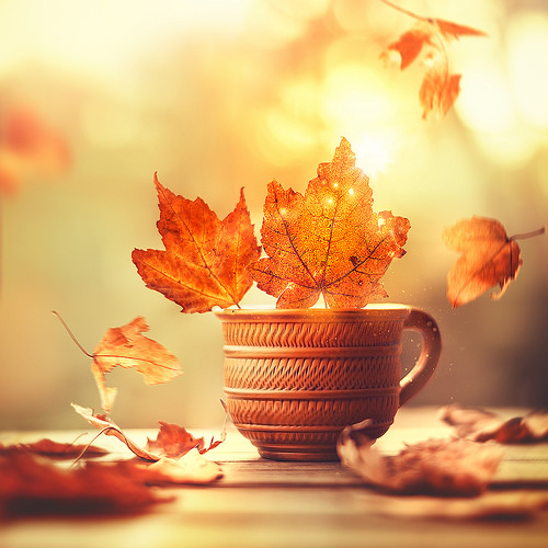 CUP OF AUTUMN.jpg