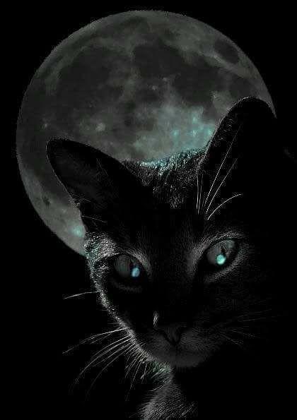 MOON CAT.jpg