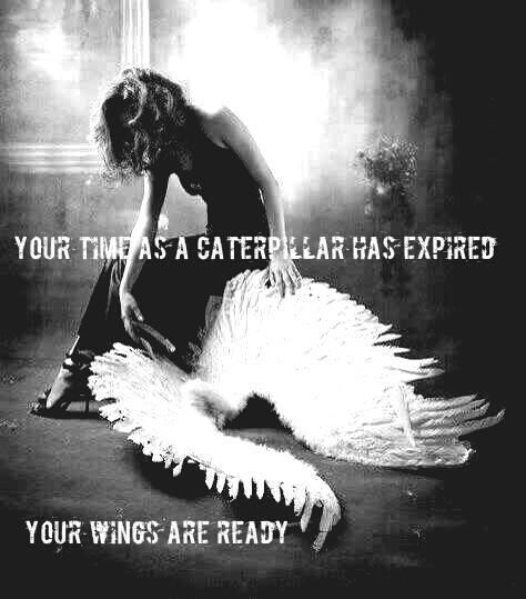 YOUR WINGS ARE READY TWOO.jpg