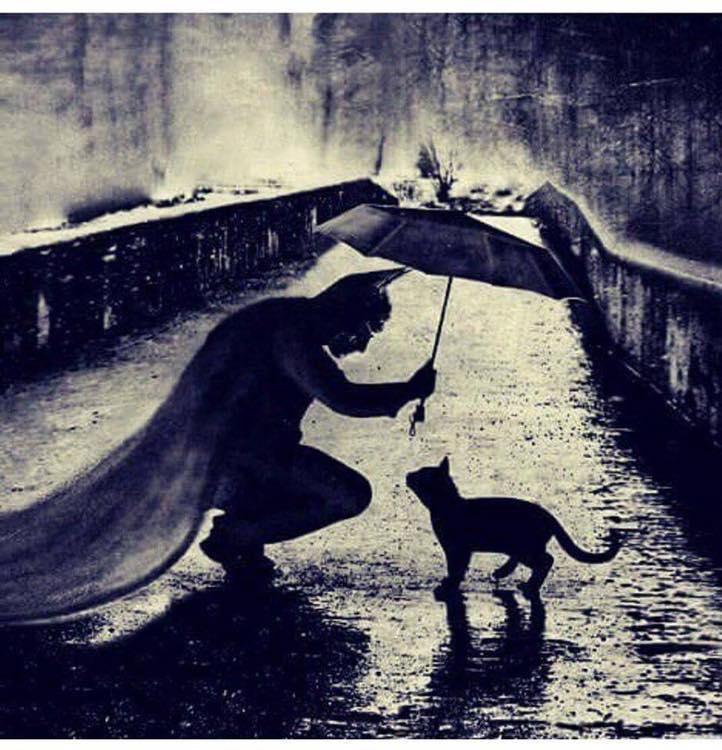 BAT CAT.jpg