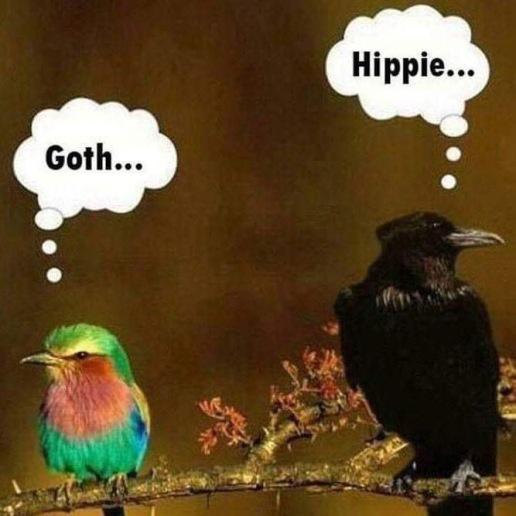 HIPPIE GOTH.JPG